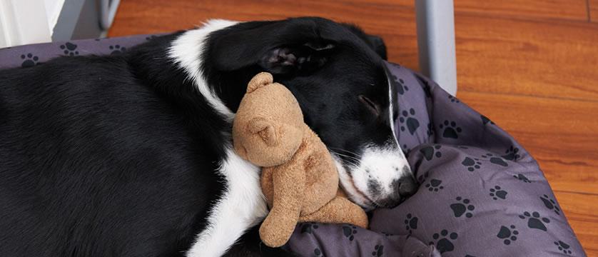 Unser Agentur Hund Luna bei der Arbeit